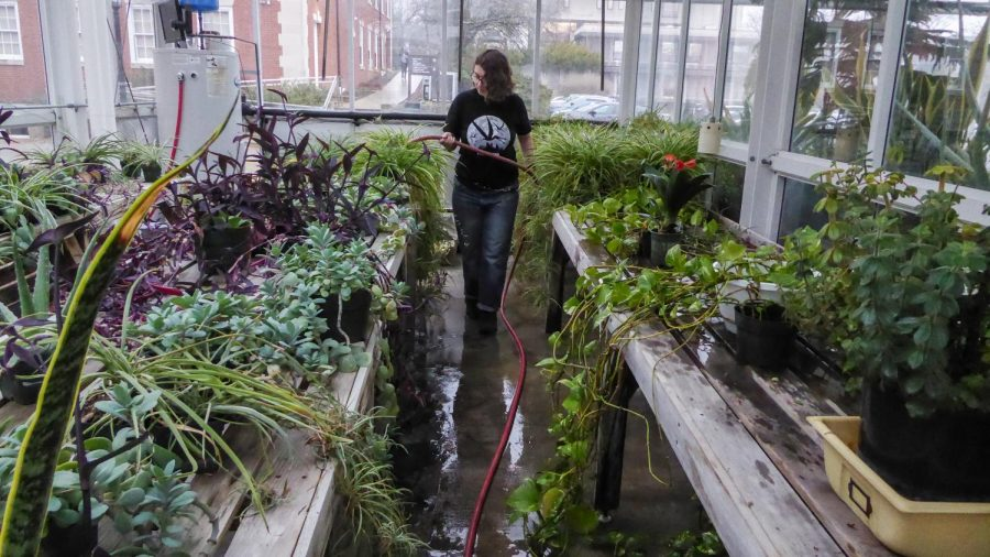 Greenhouse attendant Jay Margolis '20 waters plants earlier this semester. Photos by Jade Miley.
