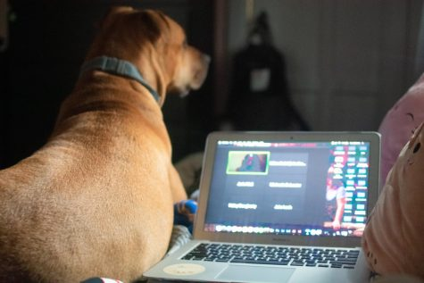 Lilly Kubit's personal setup during the two week at-home class sessions in December, featuring her dog and laptop. Photo by Lilly Kubit